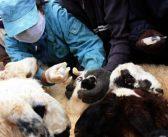 Хүн, мал, амьтны гоц халдварт өвчнөөс урьдчилан сэргийлье
