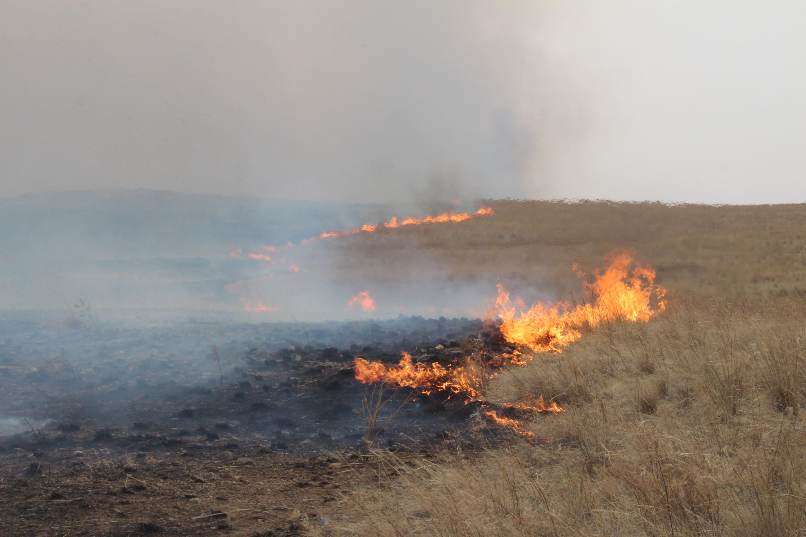 Image result for ой хээрийн түймэр