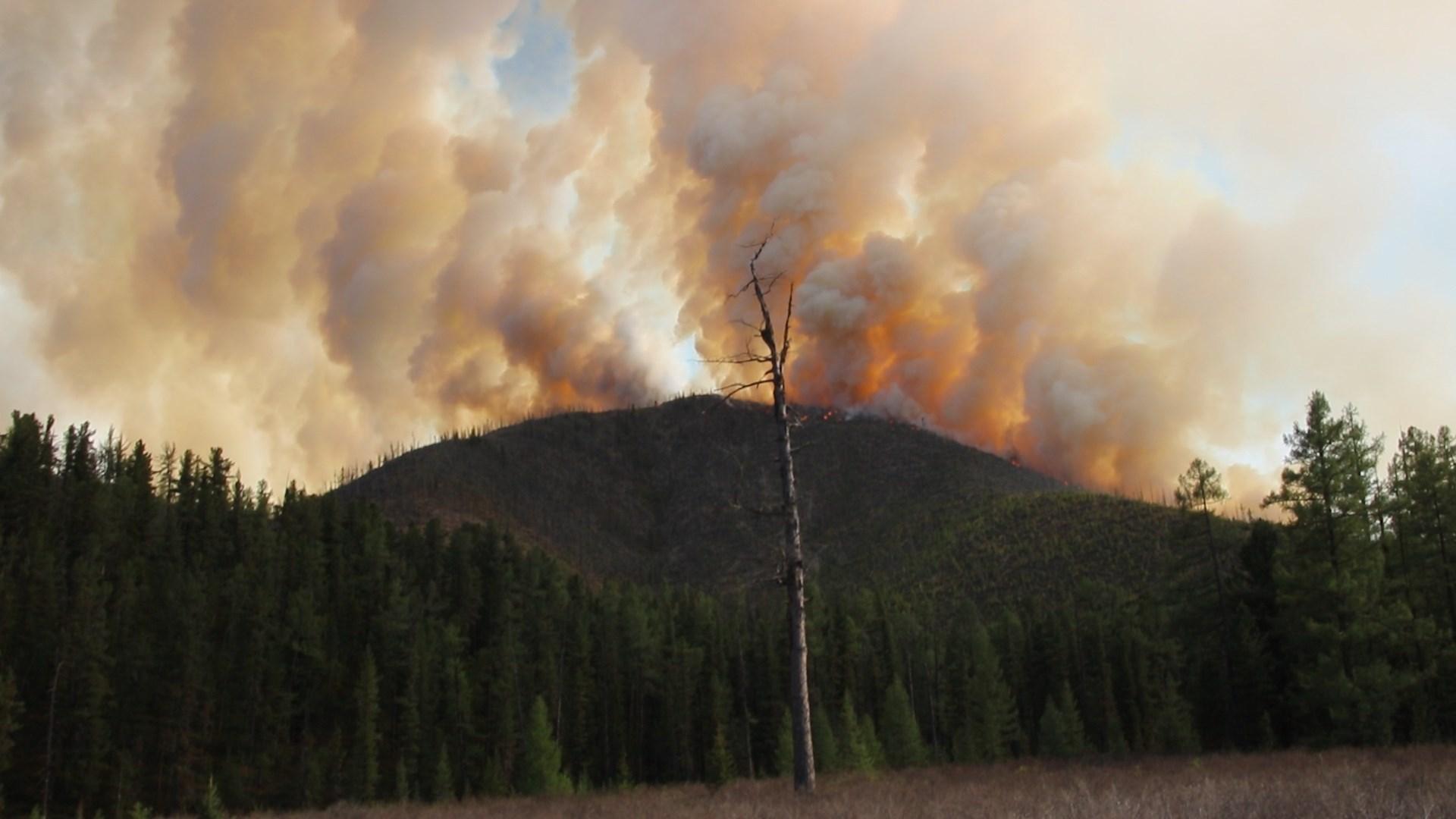 Image result for хөвсгөл түймэр