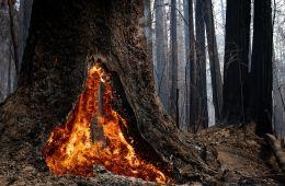 12102020_redwoods-7_155557-1560x1040-1.jpg