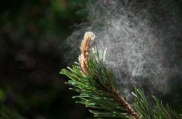 pollen.jpg